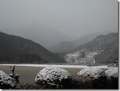 0311朝雪